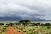 Rain on the savannah - Tsavo East Kenya