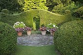 Cupressocyparis hedge and box topiairies in a garden