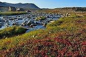 Tundra landscape in summer - Scoresbysund Greenland