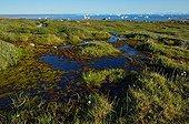 Rivers in the tundra - Scoresbysund Greenland ; flowing into Scoresbysund