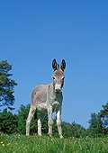 Provence donkey in the grass - France