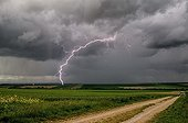 Storm of cold air over the countryside in spring - France  ; Negative lightning well branched day.