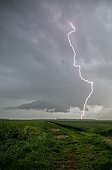 Supercell storm over the countryside - France ; Tree struck by lightning