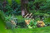 Coralbell 'Caramel' and bergenia in a city garden