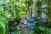 Hydrangea in bloom on a city garden terrace