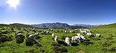 Flock of sheep Barèges-Gavarnie - Estives du Hautacam France