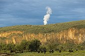 African buffalo in front of a cliff - Hell's Gate Kenya ; Smoke of geothermal plant
