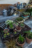 Potted plants and watering cans in a city garden