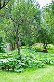 Jardin envahi par le développement des potirons