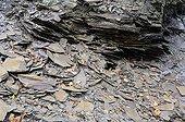 Shale slate - France Ardennes