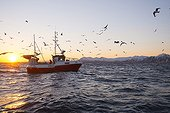 Fisherman boat off Andenes Harbour at sunrise - Norway