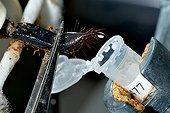 Scorpion's venom removal ; Laboratory Alphabiotoxine.
