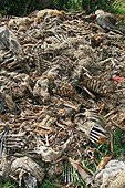 Mass grave for the reintroduction of the Vultures - Verdon France
