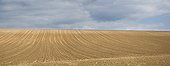 Hill sown Corn in spring - Alsace France  ; monoculture but on large surfaces, transformation and loss of soil and landscape by intensive agriculture