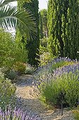 Lavenders in bloom in a mediterranean garden