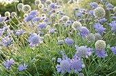 Flowers in a mediterranean garden
