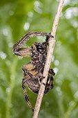 Spider on stem - France