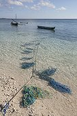 Lines for Agar Agar Seaweed cultivation - Kangge Indonesia
