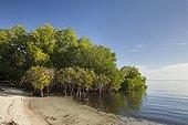 Mangrove trees on Deere Beach - Alor Indonesia