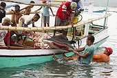 Fishermen extracting Manta body from boat - Solor Indonesia