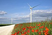 Lined road between wind turbines Poppies - France