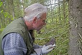 Ringing young Tengmalm's Owl in forest - Finland ; mesuring the wing