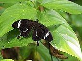 Black and White Helen - Kinabatangan Borneo Malaysia