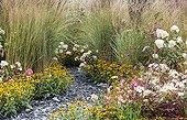 Late summer flowerbed in bloom in a garden ; Rudbeckia fulgida 'Little Gold Star', Pennisetum setaceum 'Rubrum', Gaura,Hydrangea paniculata