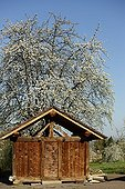 Chalot and Cherry blossoms - Franche-Comté France ; traditional wooden chalet annexe at the farm used as attic for storage of grain alcohol important papers small territory located on the edge of the southern Vosges and the Vosges saônoises
