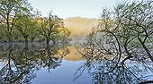 Reflecting on Lake Bret at dawn - Bugey France ; Temporary lake colonized by willows and alders, biotope inhabited by many frogs