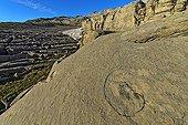 Fossil Nautilus - Desert Platé Alpes France  ; Limestone of Tertiary age nummulites