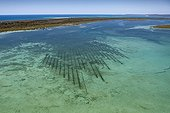 Oyster Farm - Moreton Island Australia