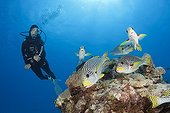 Diver and Diagonal-banded Sweetlips - Great Barrier Reef