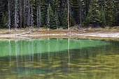 Lake Forest - Jasper Alberta Canada