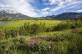 Jasper lake and mountains - Jasper Alberta Canada