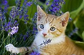 European shorthair cat with flowers
