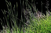 Grasses in a meadow in Catalonia - Spain