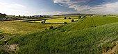 Mediterranean agricultural landscape - Catalonia - Spain