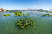 Red mangrove - Bahia de las Animas Gulf of California