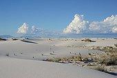 Gypsum desert - White Sands NP New Mexico USA