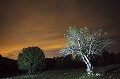 Starry sky and Fig tree - Sierras de Cazorla Spain