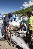 Weighing Yellowfin Tuna - Larantuka Flores Indonesia