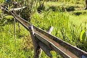 Water bamboo pipe - Gunung Mutis Timor Indonesia