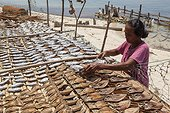 Woman upturning drying fish - Grogos Island Maluku Indonesia ; Koon Marine reserve WWF-Indonesia projectTerritorial User Rights for Fishing (TURF)