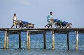 Men carrying fresh fishes on jetty - Seram Maluku Indonesia