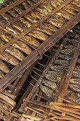 Smoked fishes in traditional market - Seram Maluku Indonesia