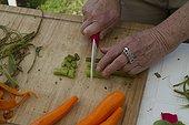 Preparation stems swamp thistle - Auvergne France ; Guy Lalière, naturopath botanist<br>