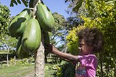 Little girl picking a papaya for jam - Tanna island Vanuatu ; 6 year old girl