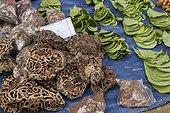 Termit nests used as traditional medicine - Borneo Indonesia ; WWF-Indonesia