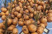 Local fruits in market - Borneo Indonesia ; Mahakam river bank<br>WWF-Indonesia